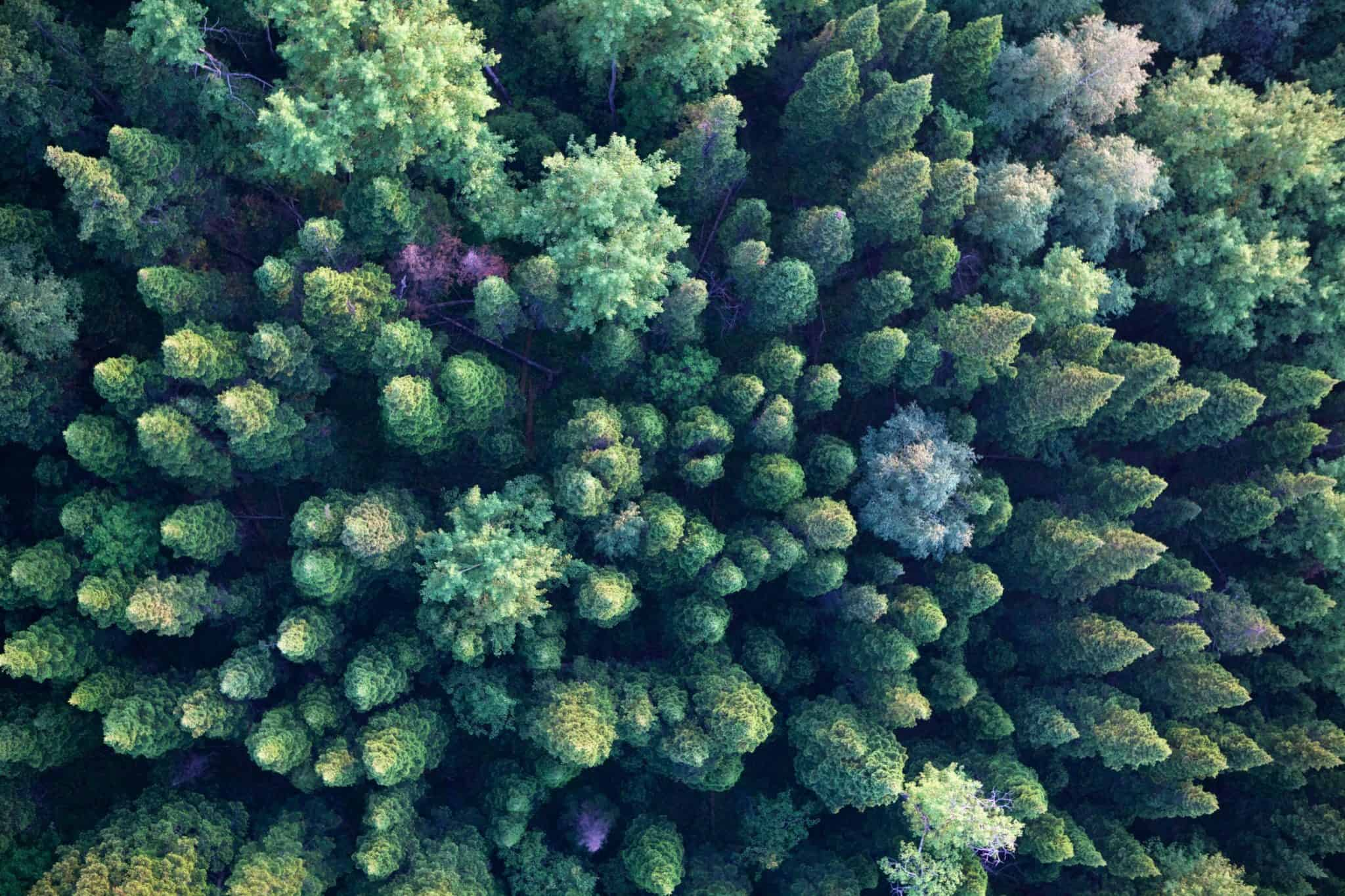 Alberi dall'alto - Ecomondo 2021 CLAN